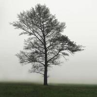 een enkele eenzame boom in een mistig boerenveld in de ochtendnevel en mist. een boom in het veld in de mist foto