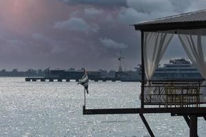 zeegezicht van een café aan zee en de abchazische vlag in sukhumi, abchazië foto