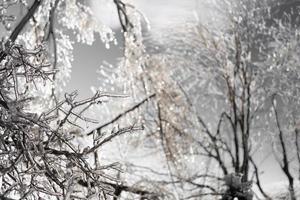 ijspegels op kale boomtakken foto