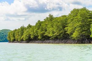 mooi tropisch mangrovebos in Thailand foto