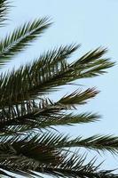 palmbladeren en blauwe lucht in de lente foto