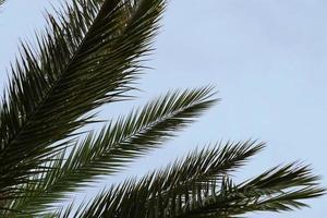 palmboom en blauwe hemel foto