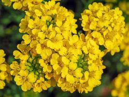 gele bloemen van bovenaf foto
