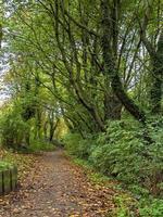 met bomen omzoomd gedeelte van een pad foto