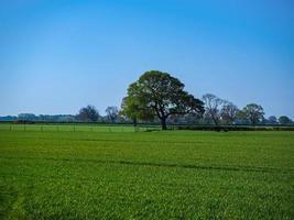eik in een groen veld met een blauwe lucht in de zomer foto