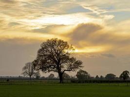 ondergaande zon achter bomen foto