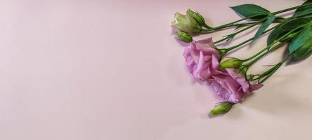 roze en witte rozenbloemen met copyspace foto