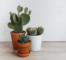 drie ingemaakte cactussen foto