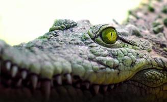krokodillenkop met brede mond en gele ogen van dichtbij foto