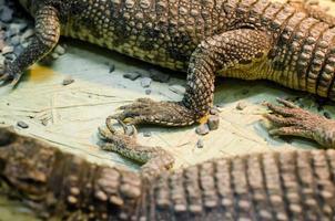 alligator krokodillenleer detail patroon close-up foto