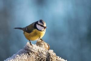 close-up van een vogel op een ijzige boomtak foto