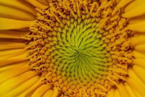 close-up van het midden van een zonnebloem foto
