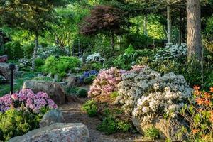rododendron tuin gedurende de dag foto