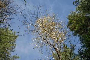 landschap met uitzicht op boomtoppen tegen een bewolkte blauwe hemel foto