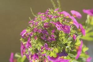 felroze bloemen naast een vijver of meer foto