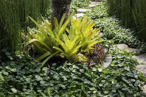 groene zomertuin van resort buitenkant foto