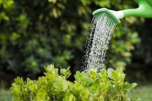 planten water geven foto