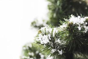 fir tree met sneeuwvlokken en twijgen foto