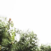 fir tree met sneeuwvlokken en takken foto