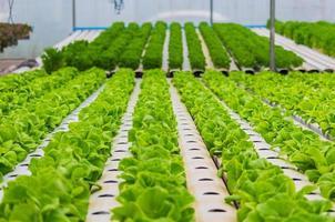 biologische groenten op de boerderij foto