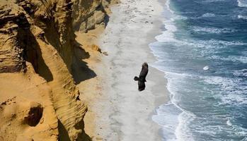 kliffen op het strand in peru foto