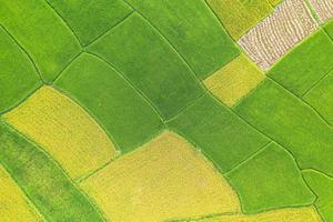 luchtfoto van het groene en gele rijstveld foto