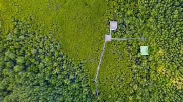 luchtfoto bovenaanzicht van mangrove houten brug foto