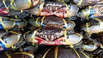 verse krabzeevruchten foto