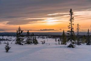 zonsondergang over pijnbomen en sneeuw foto