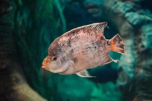 vis de oceanen van de wereld in een groot aquarium foto