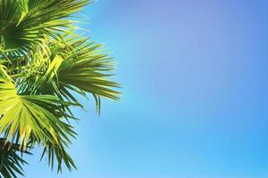 de toppen van palmbomen op een strakblauwe lucht foto