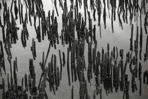 droge stengels aan de oever van het meer foto