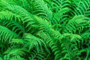levendige groene varenbladeren foto