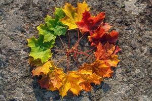 cirkel van esdoornbladeren in kleurtoon van groen naar rood foto