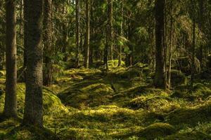 diep in een wild gegroeid bos in Zweden foto