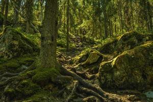 steil pad een berghelling op in Zweden foto