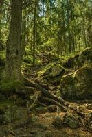 steil pad een berg op in Zweden foto