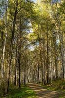 natuurlijk landschap met uitzicht op bomen en een pad in het bos. foto
