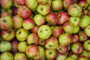 natuurlijke achtergrond met rood-groene appels foto