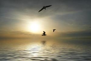 zeegezicht met zeemeeuwen die over het wateroppervlak vliegen. foto