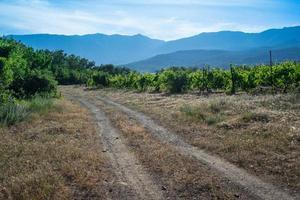 het natuurlijke landschap van de wijngaarden van de Krim. foto