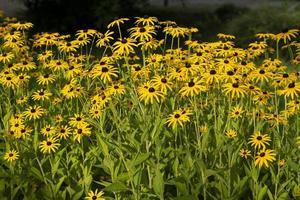 bloembed met gele bloemen, schoonheidsaard foto