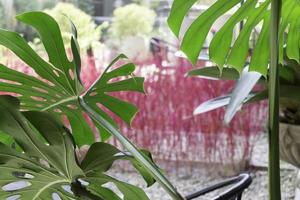 groene tropische bladeren foto