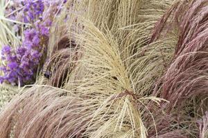 kleurrijk gras en bloemen foto