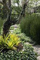 pad in een tuin foto