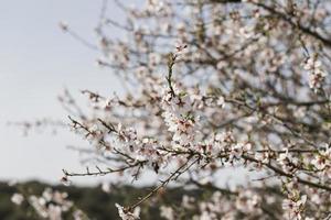 close-up bomen takken met bloeiende bloemen foto
