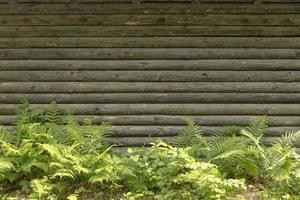 houten muur met varen foto