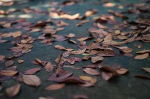 textuur en achtergrond selectieve focus van de gedroogde bladeren op de natte cementgrond met wazige voorgrond foto