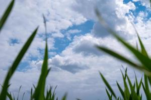 blauwe lucht en witte wolken onderaanzicht met groen gras schoonheid van de natuur, lentetijd kopie ruimte foto