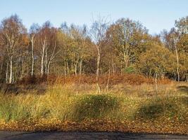 wintervegetatie in skipwith gemeenschappelijk natuurreservaat noord yorkshire engeland foto